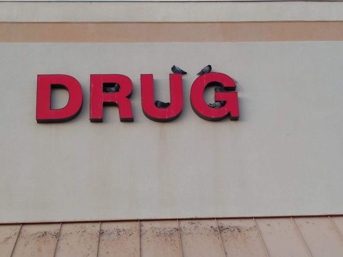Pigeons On Drugs