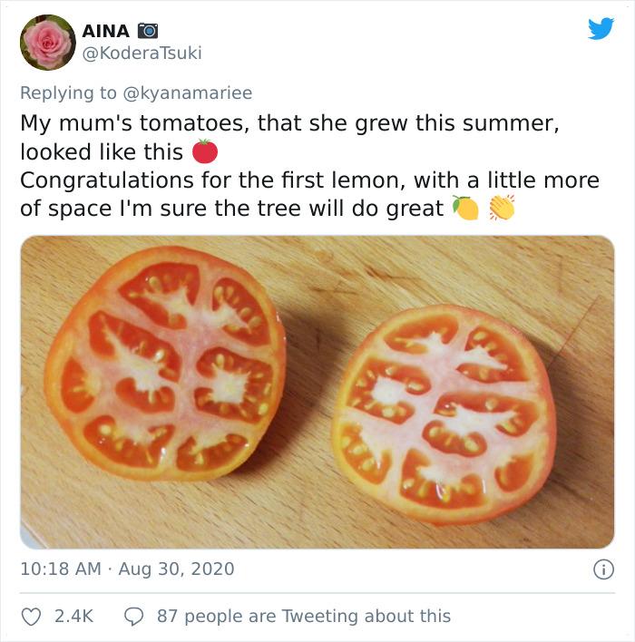 Funny-Failed-Harvest