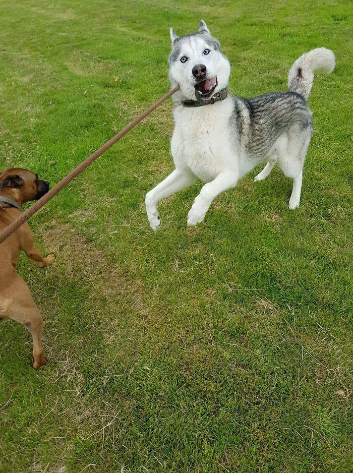 Unflattering-Dog-Photo-Challenge-Facebook