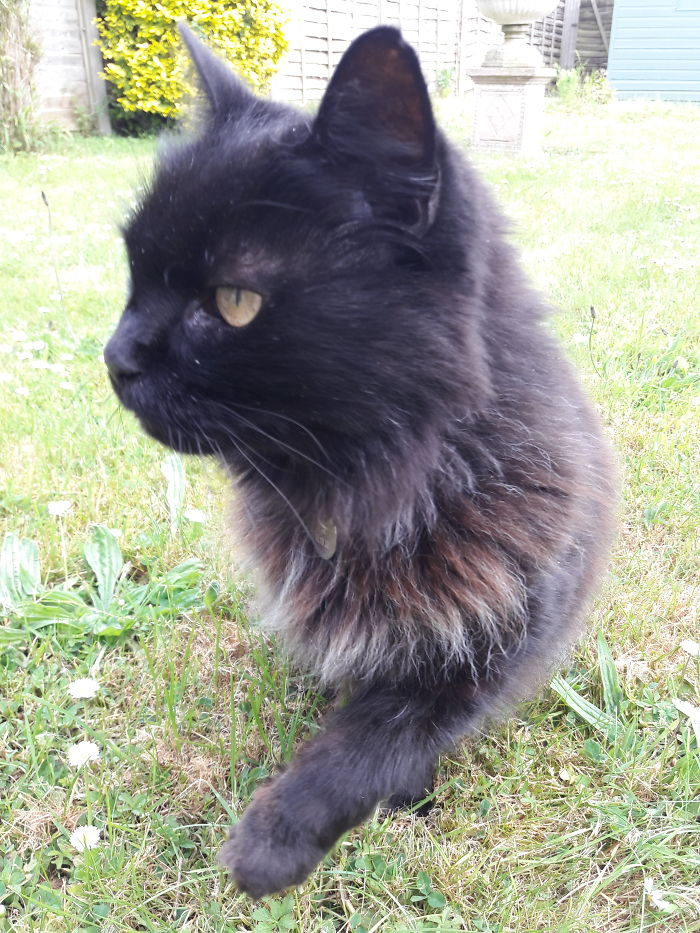 Molly, 16 Years And Still Dancing