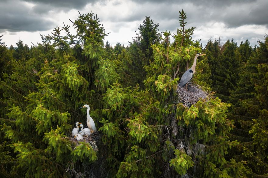 Wildlife Category Winner: Where Herons Live