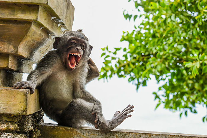 The Finalists Of The 2020 Comedy Wildlife Photography Awards Have Been Announced And They Might Crack You Up