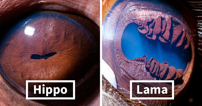 Armenian Photographer Captures Just How Unique Animal Eyes Are (30 Pics)