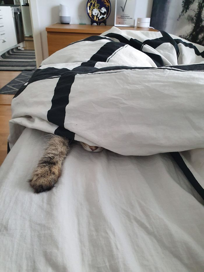 Cats-Preparing-For-Sneak-Attack
