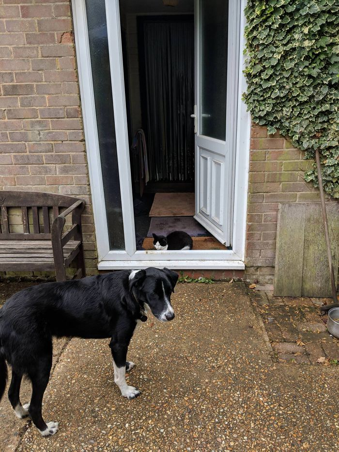My Cat Sits In The Doorway To Stop The Dog From Going Inside