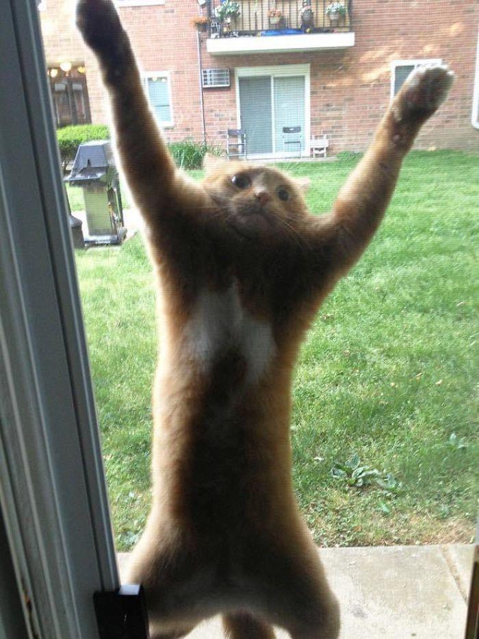Creo que quiere entrar