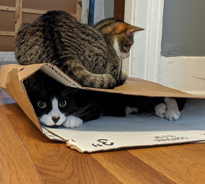A uno le gusta esconderse en agujeros y al otro sentarse en cajas