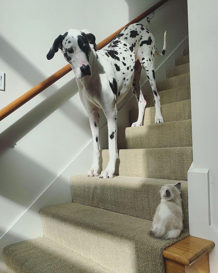 El Gato Asustadizo Más Grande Del Mundo