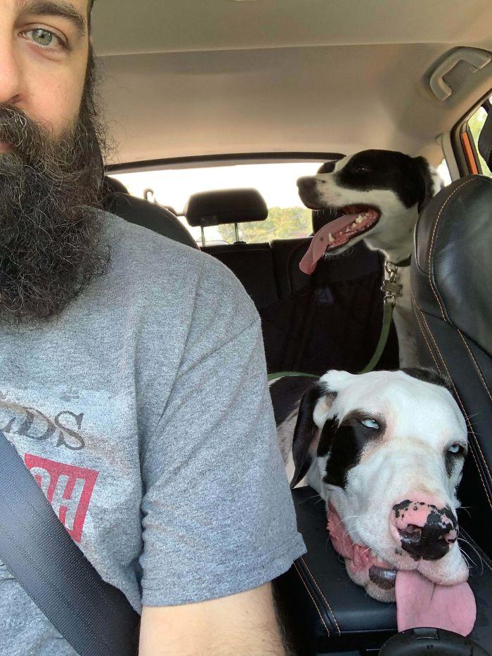 El Parque Reventó A Mi Perro