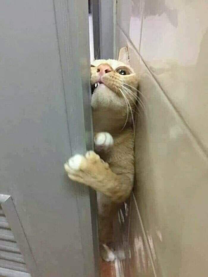 ¿Qué haces en el baño, humano?