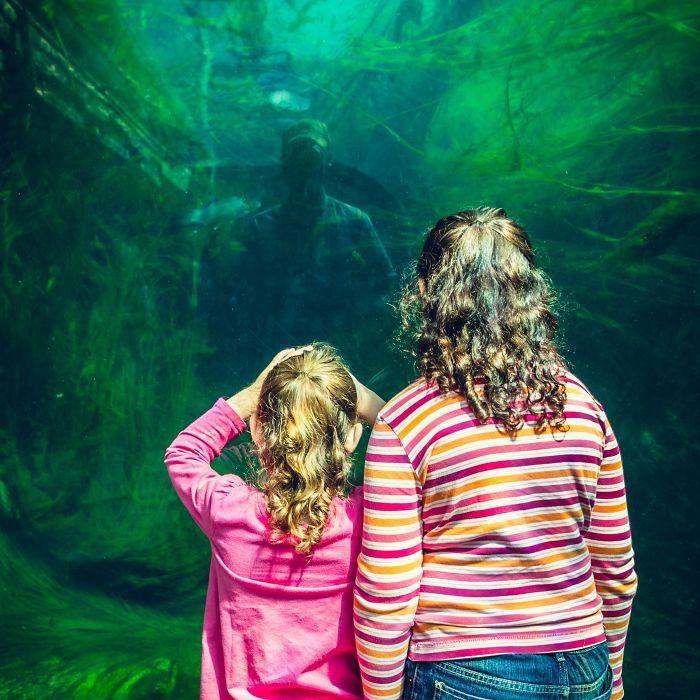 Foto de mis hijas en el zoo que parece una película de terror