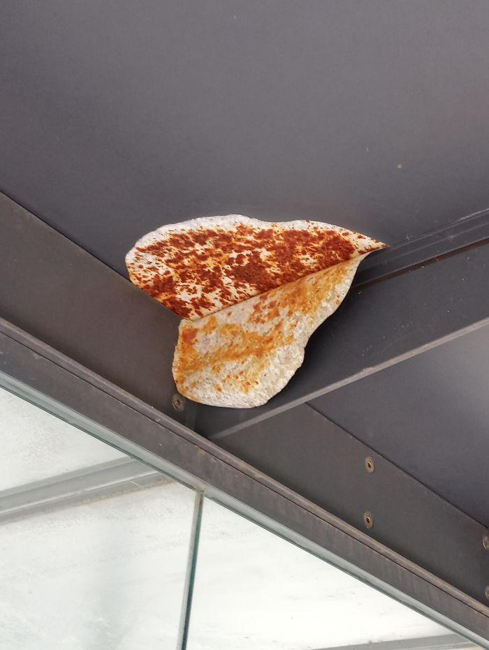 Tortilla prohibida