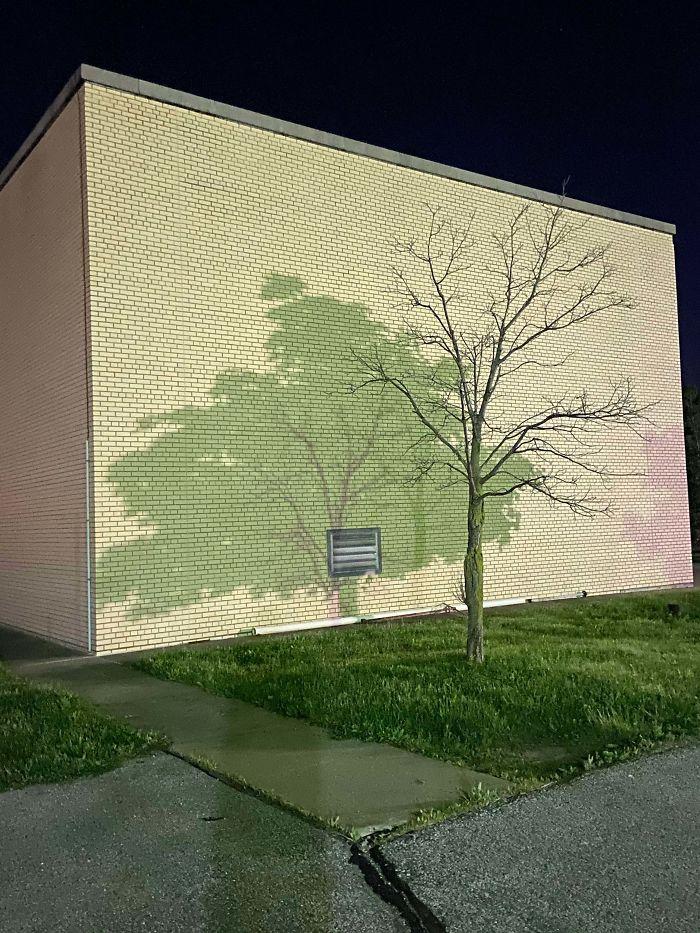 Sombra de dos árboles distintos en el aparcamiento
