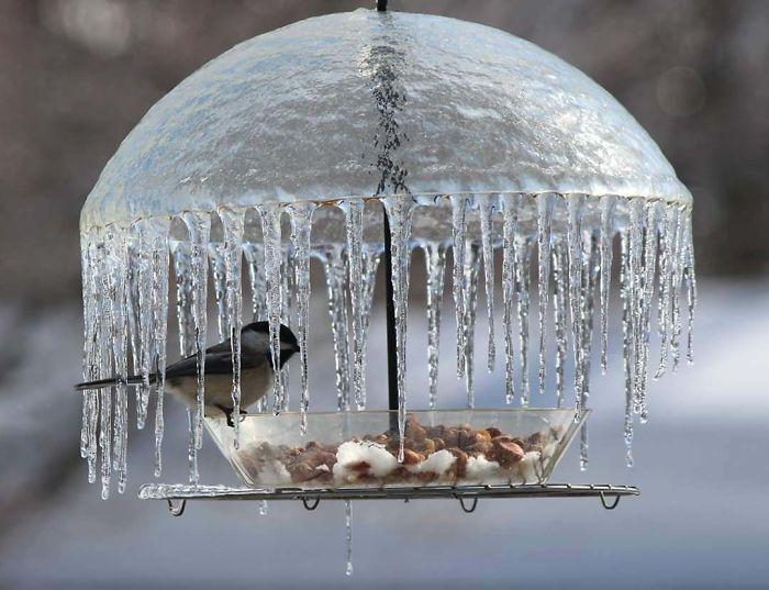 Paraguas congelado en un comedero para pájaros
