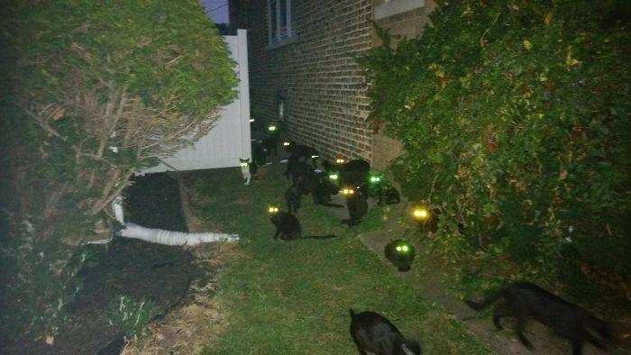 A House Near Me Has A Bit Of A Cat Problem