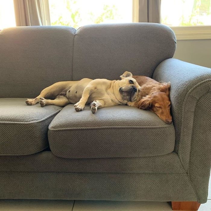 I Went To The Shelter To Adopt A Dog, And I Found Those Two In This Posture, I Couldn't Separate Them So I End Up Adopting Both Of Them