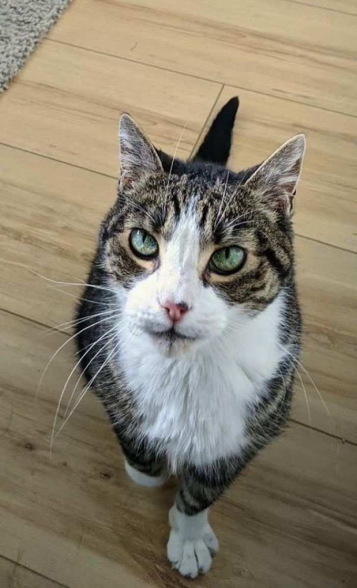 Most Of Our Friends Don't Believe We Have A Cat. We Don't See Him Much Either As He Mostly Hides Behind The Bed. Today, While I Was Working, He Was Brave Enough To Come Out For Pets. This Is My 15 Year Old Cat, Elwood