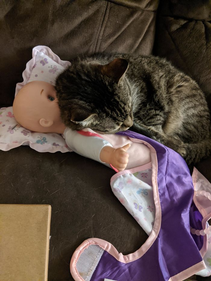 15-Year-Old Blind Cat Snuggling Daughter's Toy Because It Smells Like Her