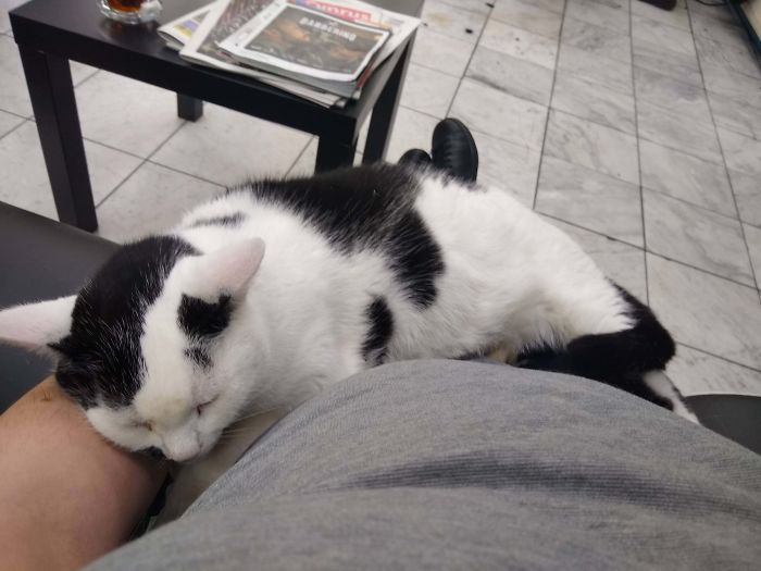 "This Happens Every Time I Go To My Barbers. He's An Old Kitty Now, And He Can't Miaow Anymore, It Comes Out As ""Aaaggh!"" I Always Let A Load Of Customers Go Ahead Of Me So I Don't Disturb Him. Time Spent With Cats Is Never Wasted"