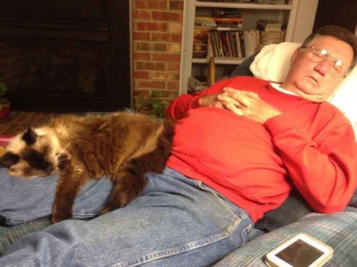 Two Best Friends Growing Old Together: How My 20-Year-Old Cat And 70-Year-Old Father Spend Their Evenings
