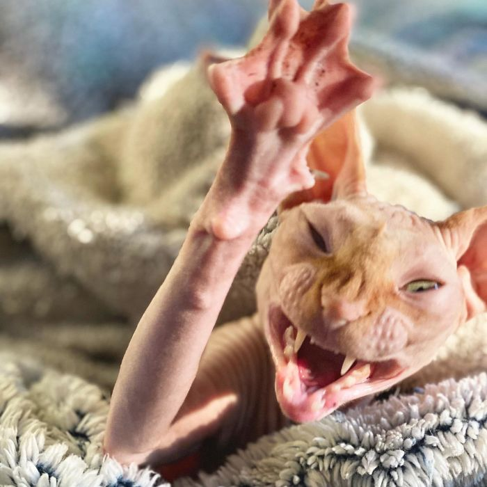 I Caught A Yawn