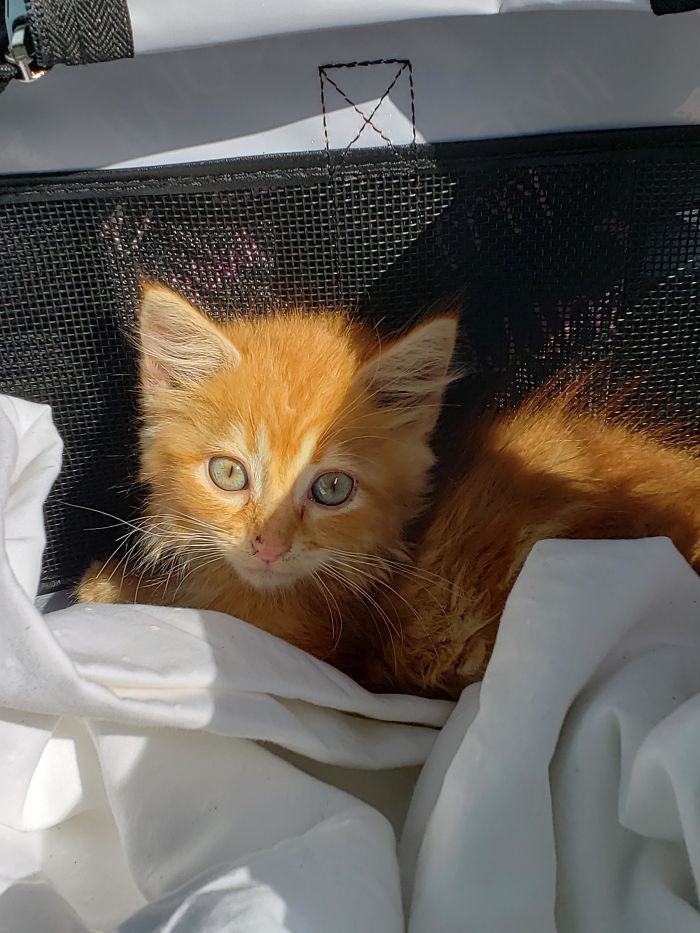 A Friend Found This Guy On Her Farm Last Night, So My Husband I Adopted Him Today.