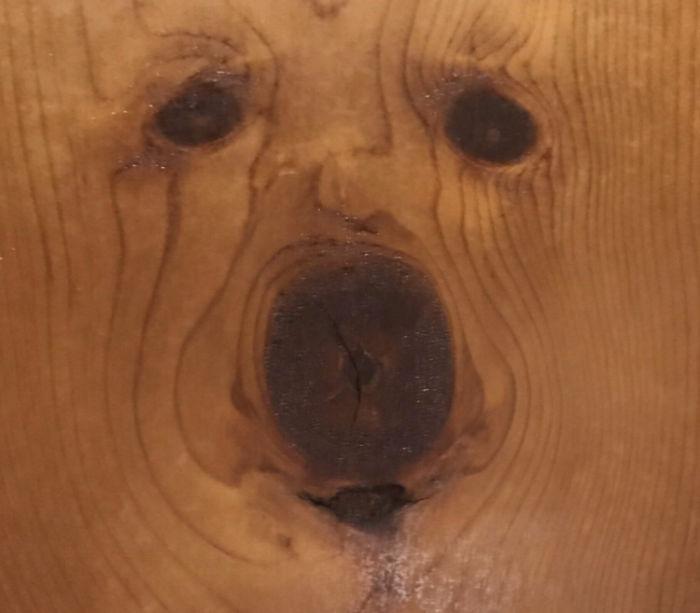 La forma en que este nudo en mi pared se parece a un perro