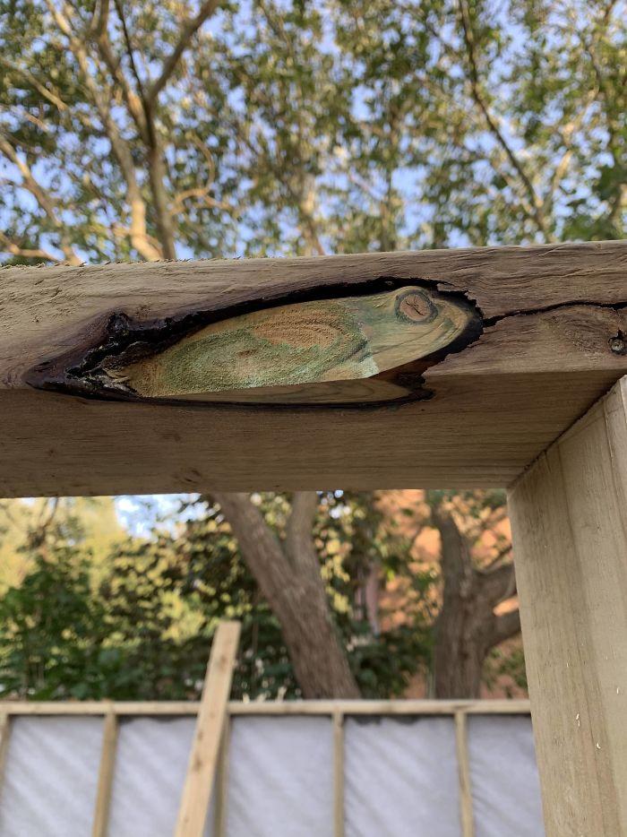 Este nudo en la madera parece una rana