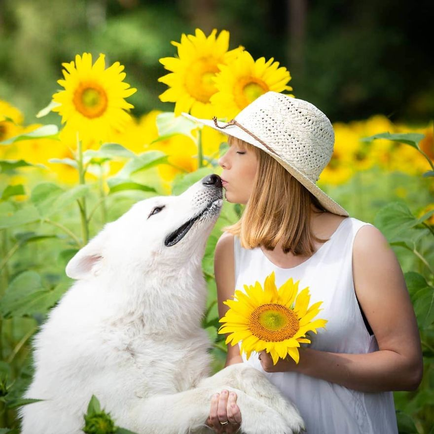 Woman's Photoshoot Of Her Three Dogs With Sunflowers Goes Hilariously Wrong When They Discover How Tasty The Flowers Are