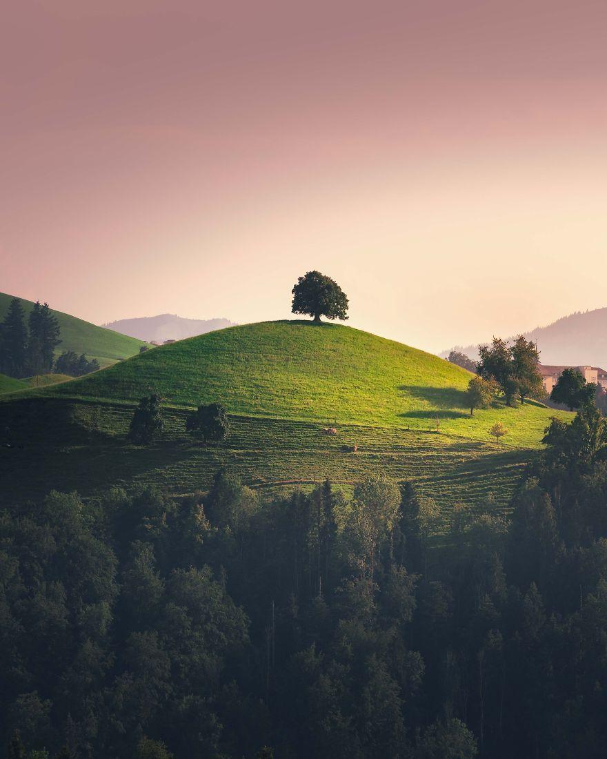 A Beautiful Tree On A Hill