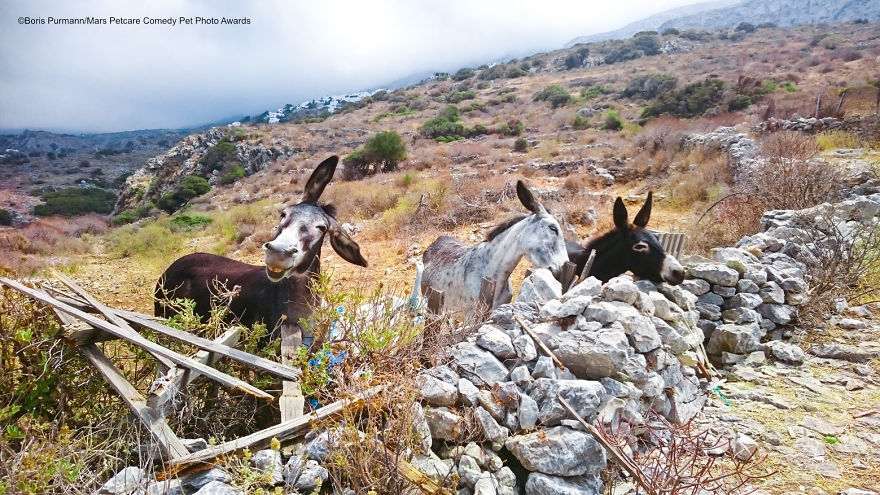 'The Funny Amorgos Donkey' By Boris Purmann