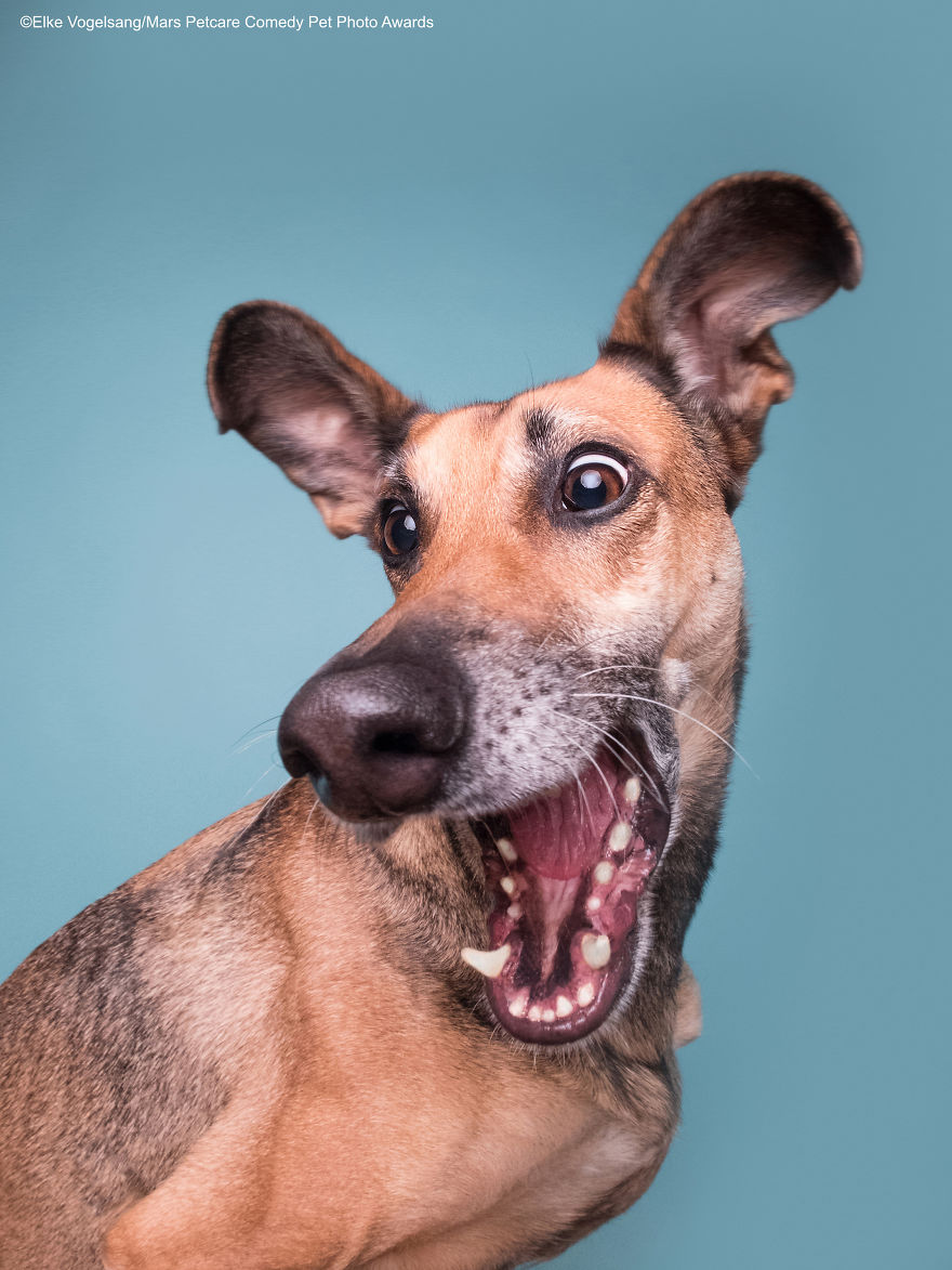 'Squirrelll!!!' By Elke Vogelsang