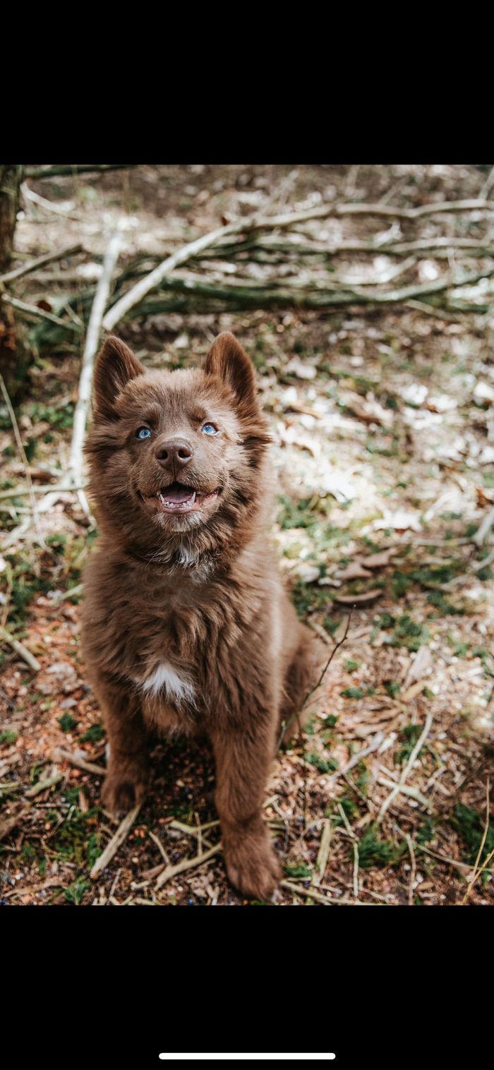 Husky Quoi: The Cutest And Rarest Siberian Husky