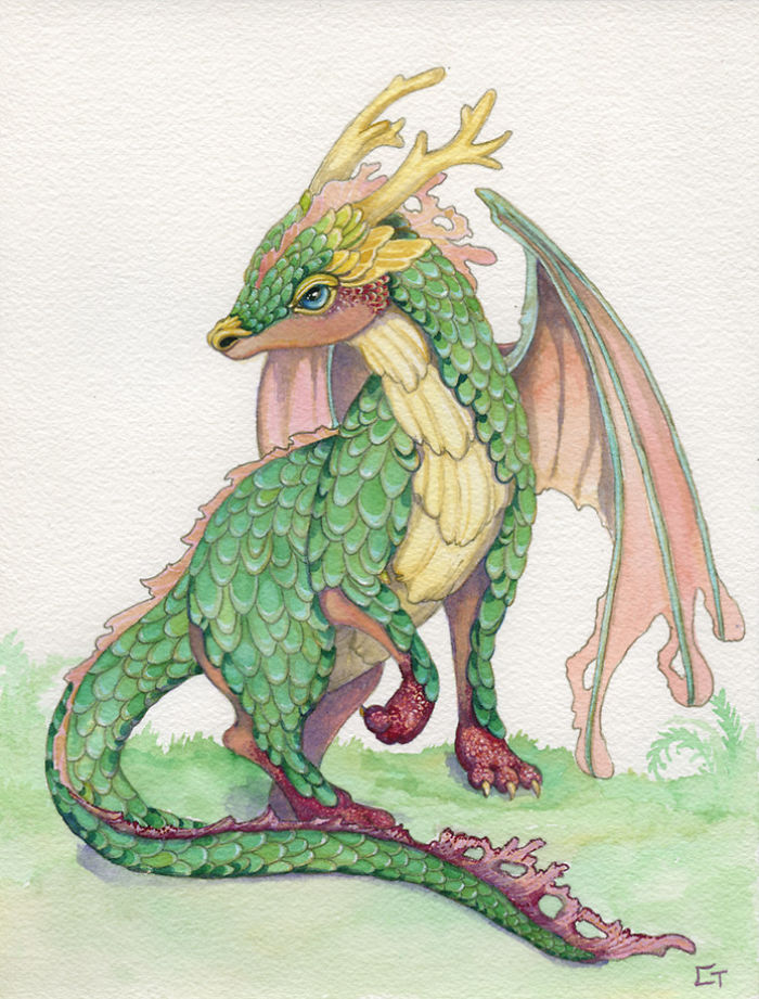 Ruby Footed Dragon