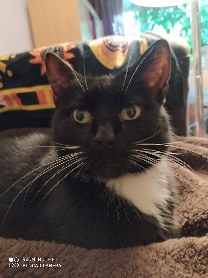 My Wonderful Cat Mr. Binks, He Is 14 Years Old. I Love Him