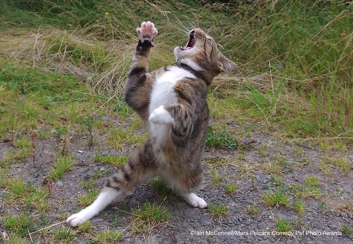 Gato superdramático, Iain Mcconnell
