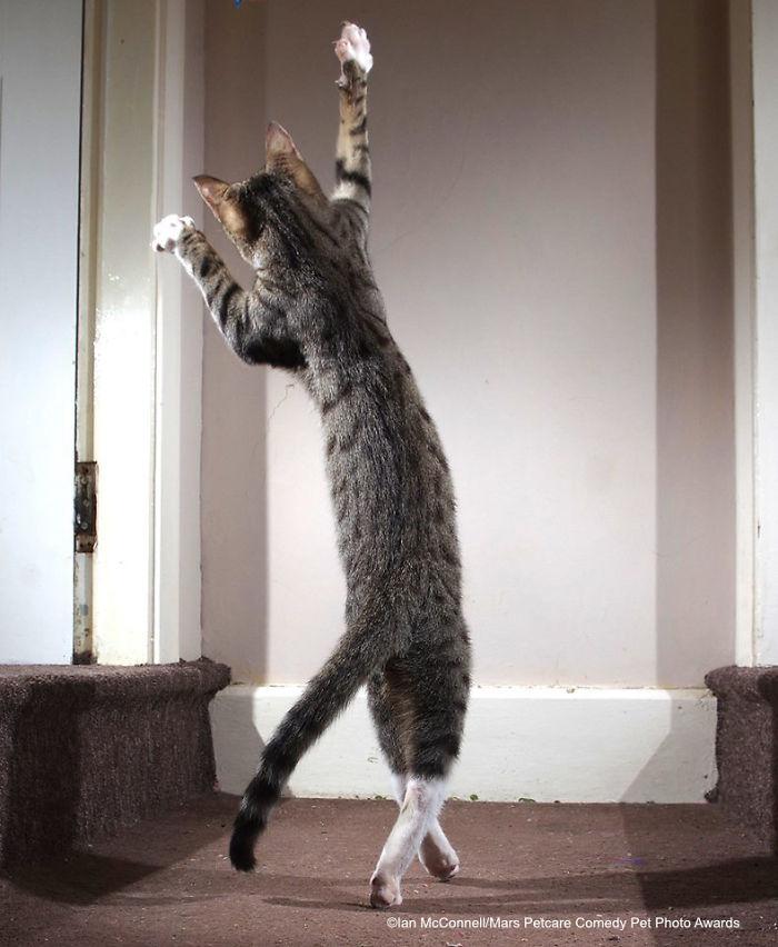 Gato bailarín, Iain Mcconnell