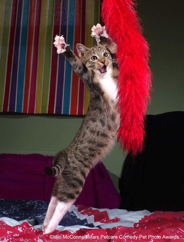 Gatito bailarín, Iain Mcconnell