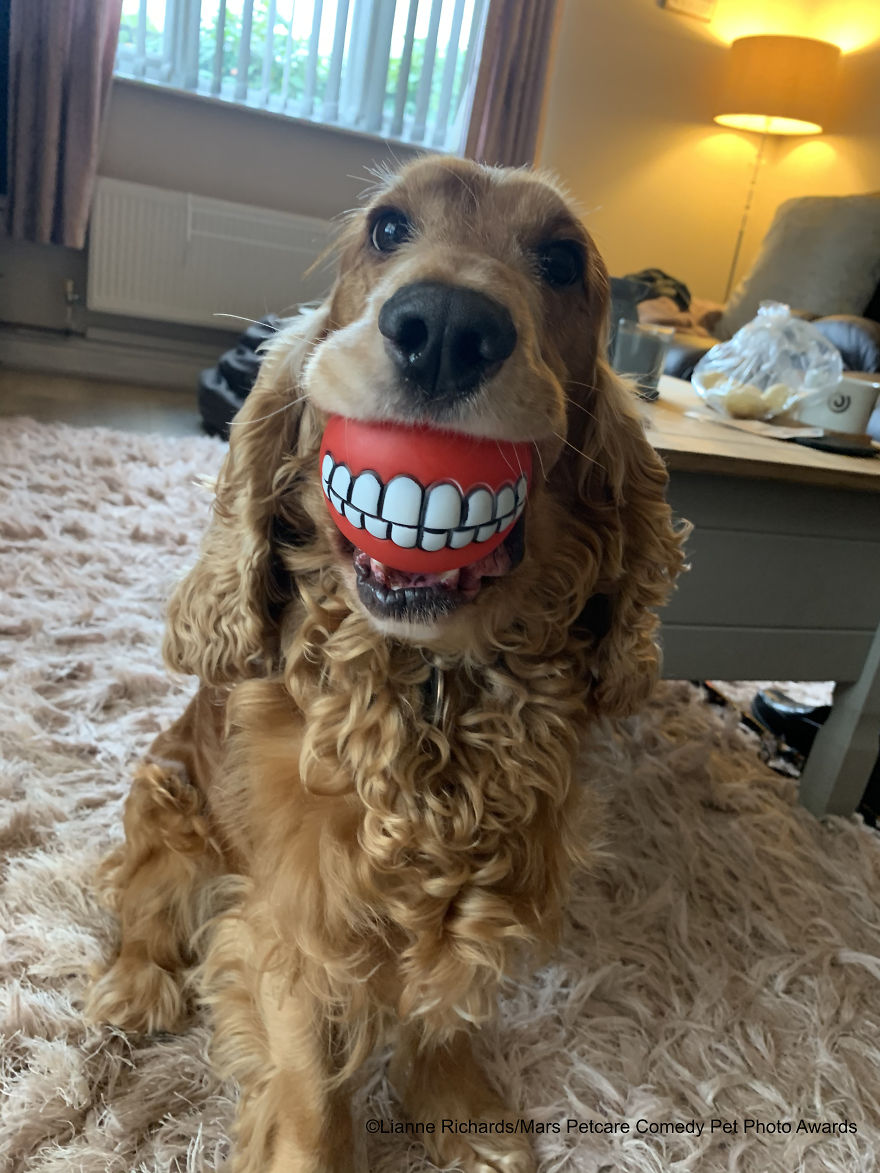 'Buddy's New Teeth!' By Lianne Richards
