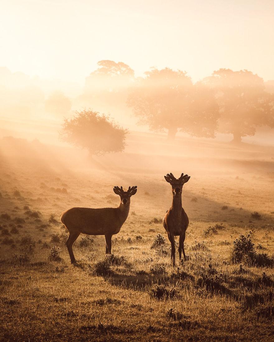 Peaceful Morning Scenes