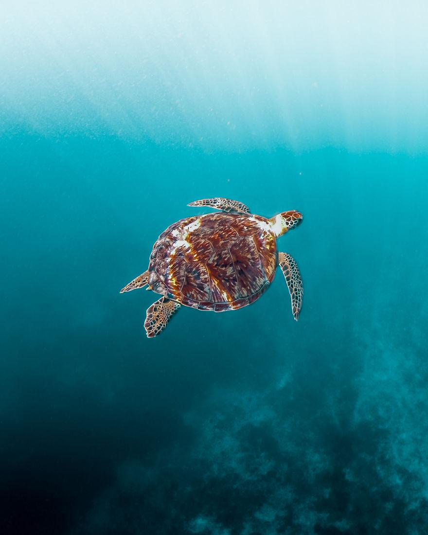 Peaceful Underwater World