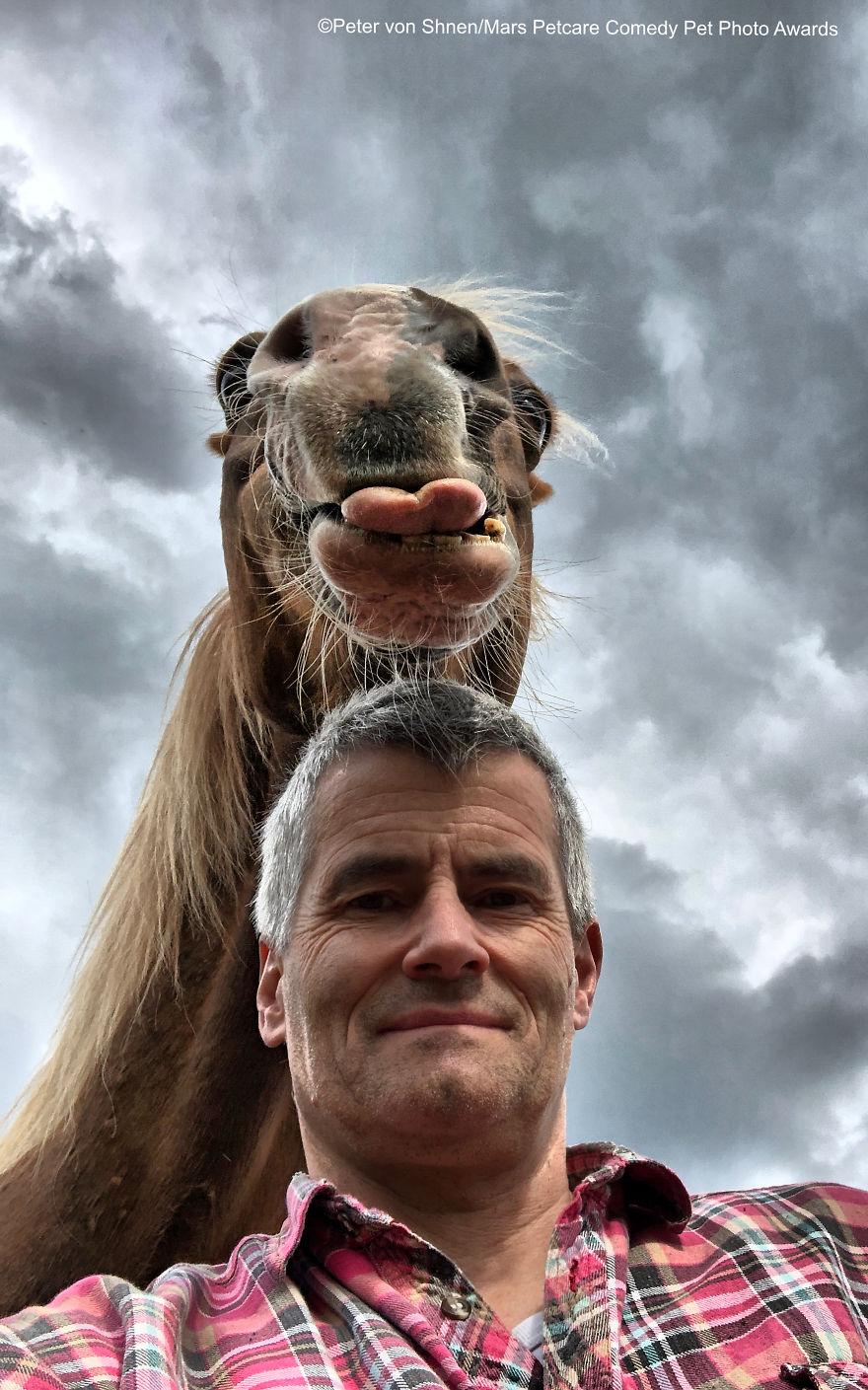 'Funny Horse' By Peter Von Shnen