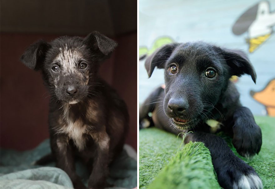 This Argentine Ngo Is Giving Abandoned Animals A Second Life