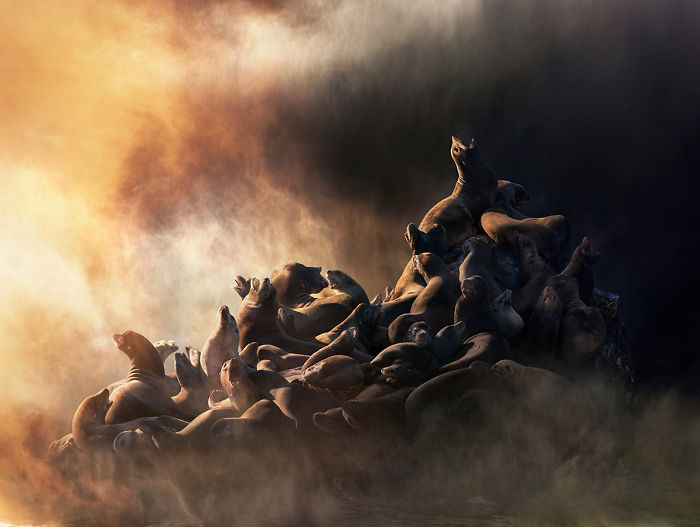 The Allegorical And Unusual Nature Of Simen Johan