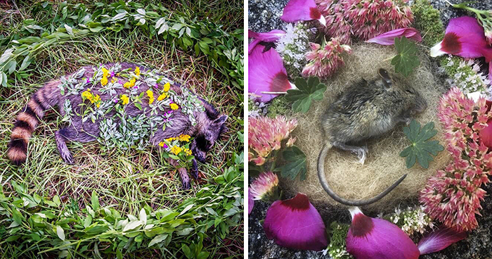 This Woman Creates Beautiful Memorials For Dead Animals She Comes Across And Here Are 25 Of The Most Heartbreaking Ones