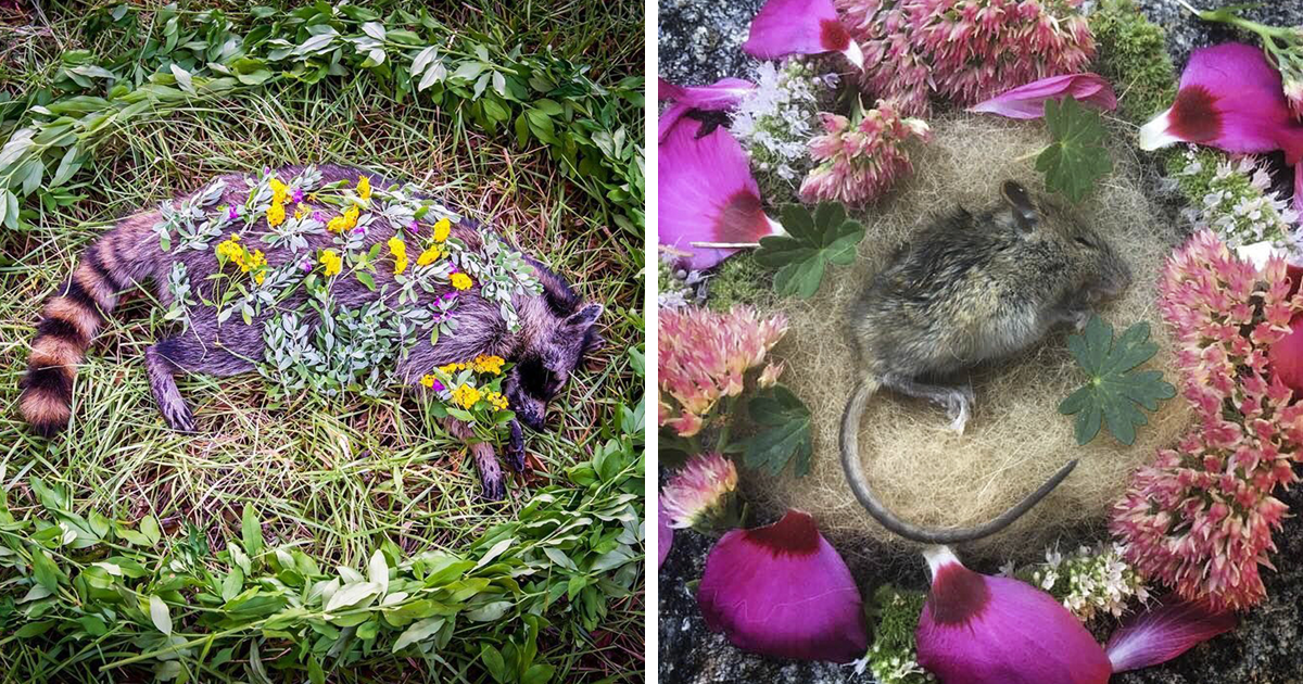 Whenever This Woman Comes Across A Dead Animal, She Creates A Beautiful Memorial For It And Here Are 24 Of The Most Mesmerizing Ones