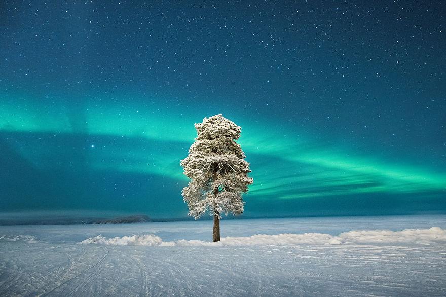Aurorae Runner Up - 'Lone Tree Under A Scandinavian Aurora' By Tom Archer