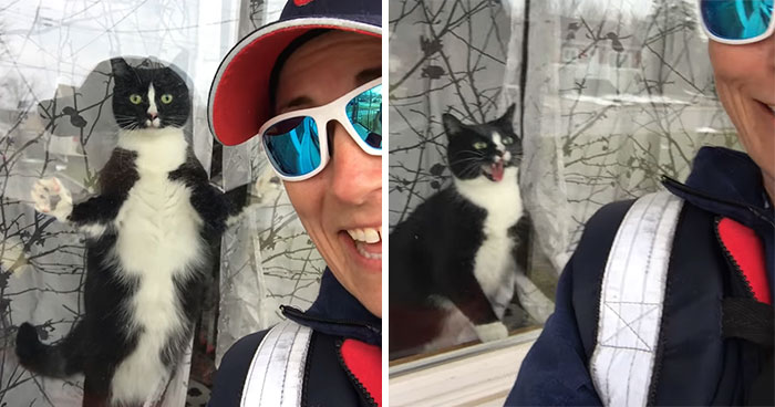 Mail Carrier Hilariously Documents How This Cat 'Protects' Its Domain Every Day