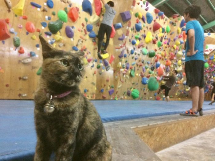 Cat Who 'Works' At A Rock Climbing Gym Gives It A Try, And The Video Goes Viral