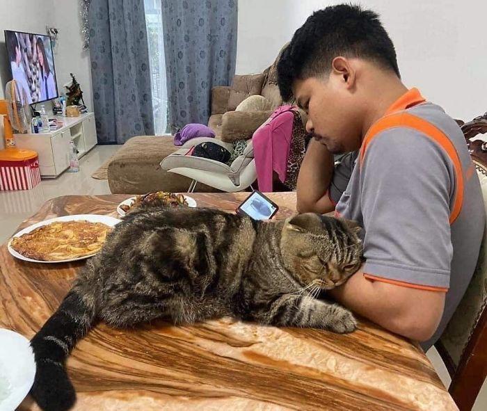 Cat-Stole-Husband-Nasrin-Hami